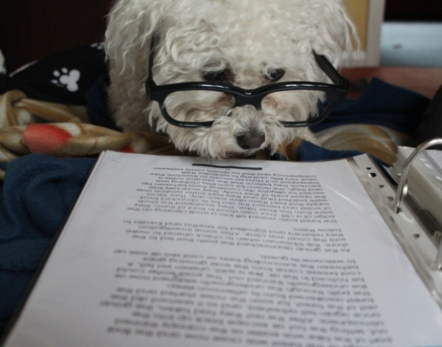 dogreading3